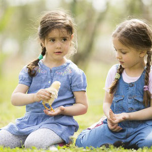 53003596 - two little girls with chickens
